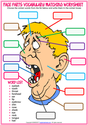 Face Parts ESL Matching Exercise Worksheet For Kids