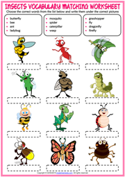 Insects ESL Vocabulary Matching Exercise Worksheet For Kids